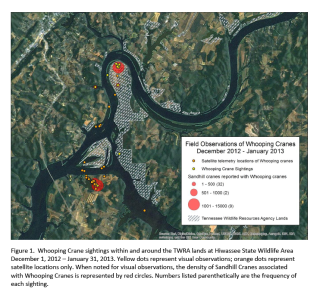 ICF-WHCR sightings at Hiwassee Dec 2012-Jan 2013